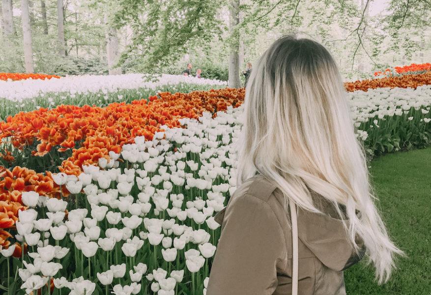 Tulip gardens at Keukenhof