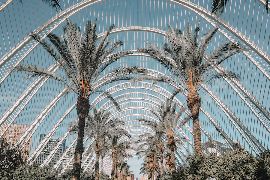 Palm trees and blue skies in the Umbracle