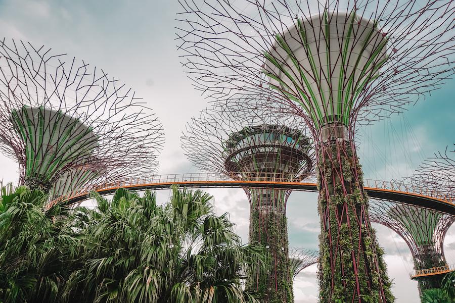 Singapore super tree grove