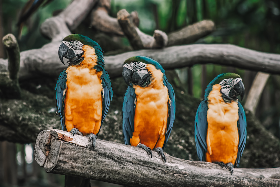 Things to do in Singapore for couples Jurong Bird Park