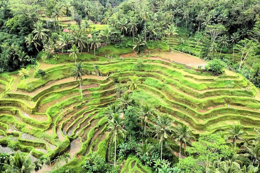 Where to go in Bali - Tegalalang Rice Terraces