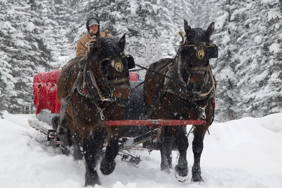 Sleigh ride through Banff wilderness