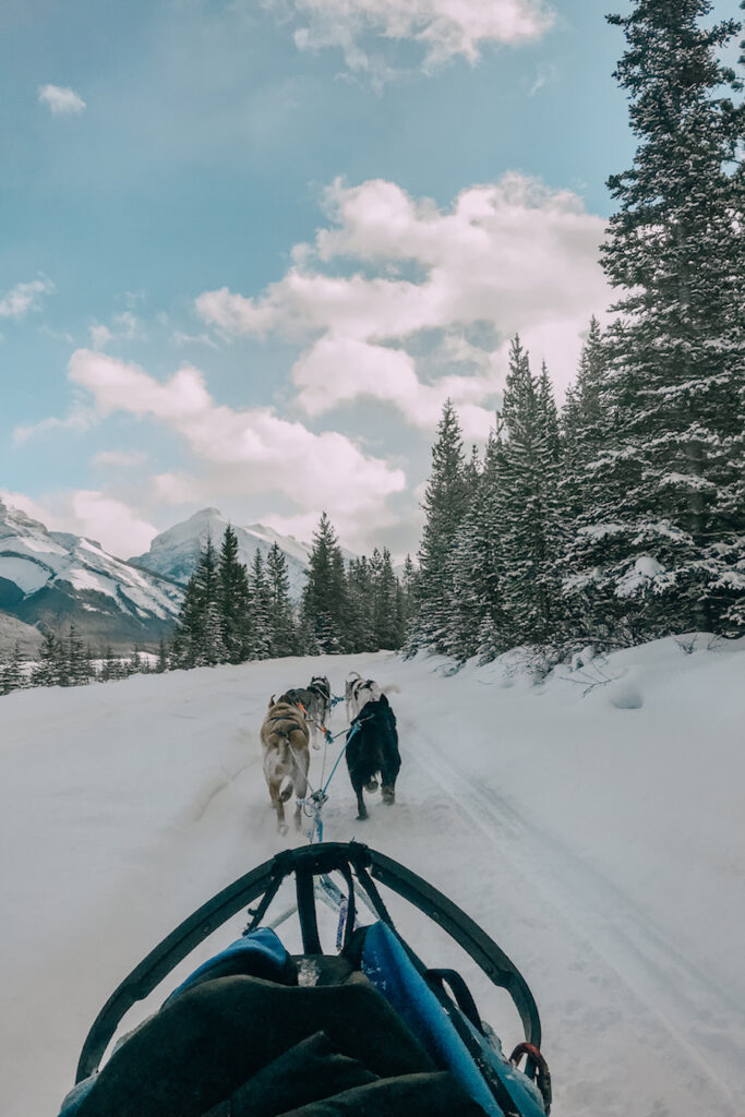 Banff winter activities - Dog Sledding