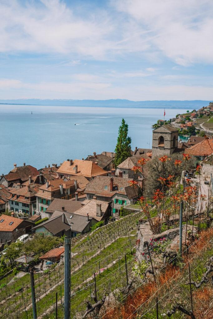 Orange roofed village with vineyards