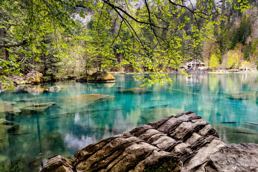 Clear blue waters surrounded by forest