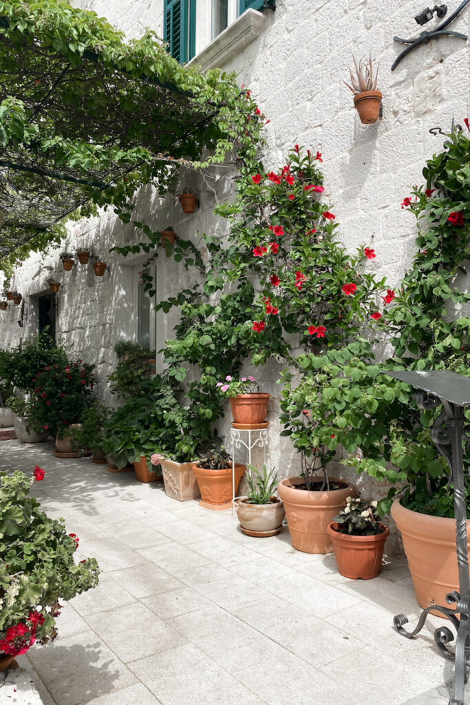 Old town streets with plants